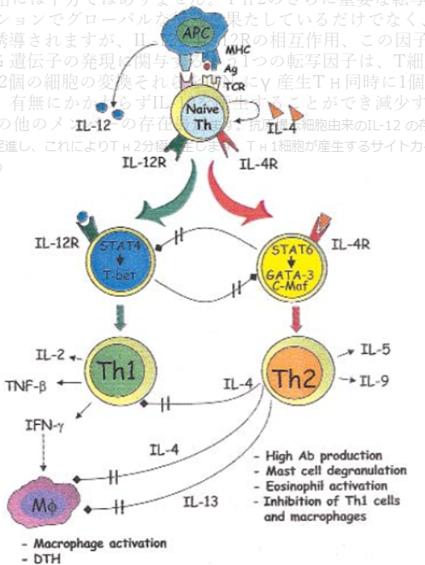 img 5e292d90d2fa6 - 花粉症の原因と治し方:原因と体質改善・対処療法に関して